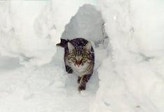 在随风飘飞的雪的灰色猫 库存照片