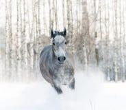 在随风飘飞的雪的马 库存图片