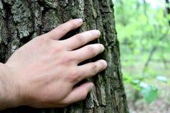在隐藏的结构树之后 免版税库存图片