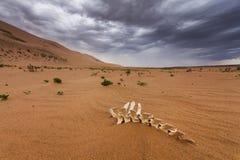 在隔壁滩的沙子的白色骨头 免版税库存照片