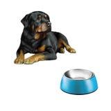 在隔绝的前面,蓝色宠物碗的Rottweiler 免版税图库摄影