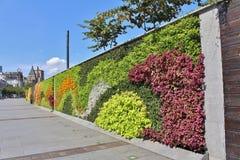 在障壁的美丽的花隐蔽的墙壁 库存图片