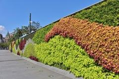 在障壁的美丽的花隐蔽的墙壁 免版税库存图片