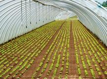 在隧道耕种的幼木庄稼  图库摄影