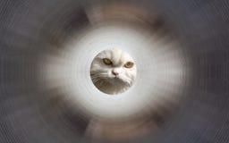 在隧道里面的猫 免版税库存照片