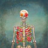 在难看的东西背景的开花的骨骼 库存照片