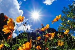 在雏菊的太阳在碧瑶市 库存图片