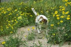 在雏菊的狗 免版税库存图片