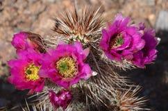 在雕峰顶的开花的仙人掌在亚利桑那 库存图片