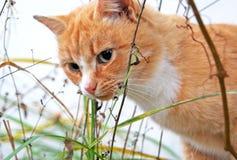 在雨下的孤独的红色猫 免版税库存图片