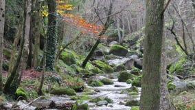 绕在雨下的小河小瀑布在秋天 股票录像