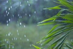 在雨下的绿色棕榈leathes 库存照片
