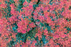 在雨以后的五颜六色的叶子作为自然本底或纹理 库存照片