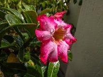在雨以后的发光的花点击 免版税图库摄影