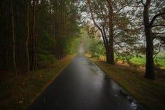 在雨以后的周期道路在森林里 库存图片