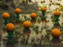 在雨以后的成熟桔子在与雨的绿色玻璃滴下 夏天 免版税图库摄影