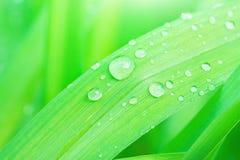 在雨以后的新鲜的绿草叶子与水下落 植物的自然背景 墙纸海报模板 有机的化妆用品 库存照片