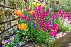 在雨以后的春天庭院 免版税库存照片