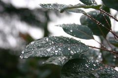 在雨以后的树 免版税库存照片