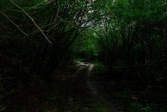 在雨以后的森林公路在一个密集的森林里 库存图片