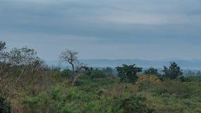 在雨以后的森林 库存图片
