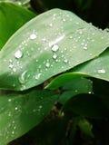 在雨以后的植被 大雨珠 免版税库存照片