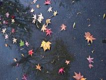 在雨以后的湿五颜六色的叶子 库存图片