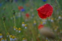 在雨以后的湿花 库存照片