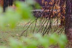 在雨以后的秋天公园 免版税库存图片