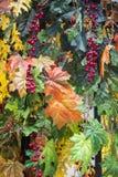 在雨以后的秋天室外人为装饰 五颜六色的槭树叶子、花和山楂树莓果一晴朗的小阳春天 库存图片