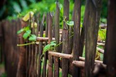 在雨以后的篱芭 库存照片