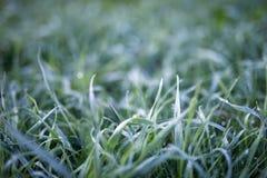 在雨以后的绿色草坪草 免版税库存图片