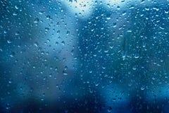 在雨以后的蓝色生气勃勃 免版税库存照片