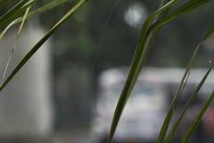 在雨以后的被聚焦的绿色叶子 库存照片