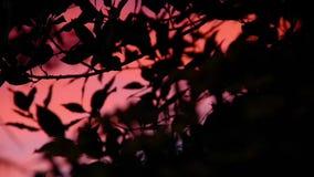 在雨以后的黑暗的五颜六色的日落