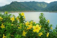 在雨停止了后,这朵黄色花是非常美丽的 免版税库存图片