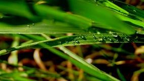 在雨关闭以后的湿绿草 股票录像