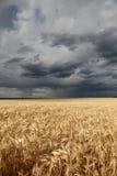 在雨减速火箭的样式麦子的域 库存图片