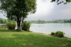 在雨前的遮荫湖边草坪在多云夏日 库存图片