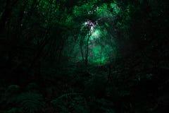 在雨季的热带林木 库存图片