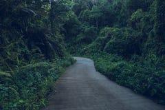 在雨季的黑暗的叶子香蕉叶子 库存照片