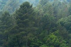 在雨帷幕以后的森林 图库摄影