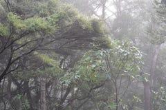 在雨期间的新西兰灌木 库存图片