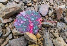 在雨期间的淡褐叶子在秋天颜色 免版税库存图片