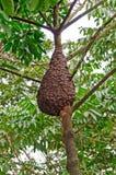 在雨林机盖的白蚁巢 免版税图库摄影