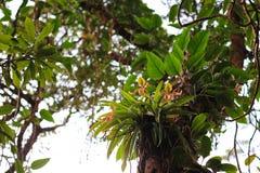 在雨林的兰花 免版税库存图片