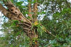 在雨林的兰花 图库摄影