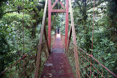 在雨林的吊桥 库存照片