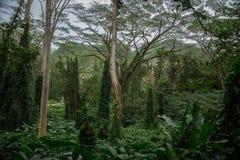 在雨林的大风景 库存图片