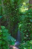 在雨林的平静的瀑布 免版税库存图片